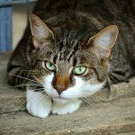 cats-eyes-2671903_640.jpg
