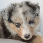 puppy-3181325_640.jpg
